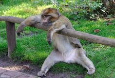 słodkie zdjęcia małpa