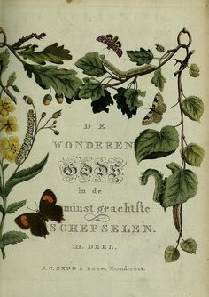 Decorative Title Page from Jan Christiaan Sepp Butterflies and Moths Prints 1762 Antique Illustration, Plant Illustration, Botanical Illustration, Botanical Drawings, Botanical Prints, Nature Journal, Nature Prints, Illuminated Manuscript, Art Pages
