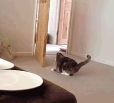 Nothing is impossible to cats!!!