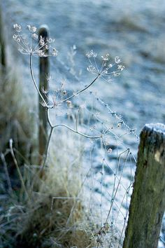 Country Fences, Country Blue, Country Charm, Autumn Day, Wabi Sabi, Winter Time, Beautiful World, Shades Of Blue, Nature Photography