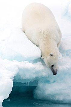 magicalnaturetour:  Arctic composition by Marco Gaiotti