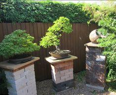 Backyard Bonsai #11 | Bonsai Bark