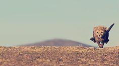 【画像】頑張れ!未来の最速ランナー!! : 〓 ねこメモ 〓