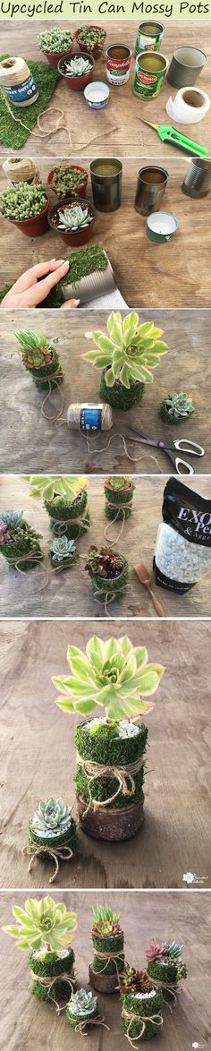 DIY Succulent Planters - Upcycle empty tins cans into these simple, chic planters by adding a bit of moss and twine! Tin can mossy pots make terrific teacher gifts, are perfect for a simple wedding or a garden party! :) Pin now and read later!