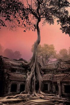 Angkor watt
