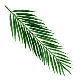 Znalezione obrazy dla zapytania palm frond vector