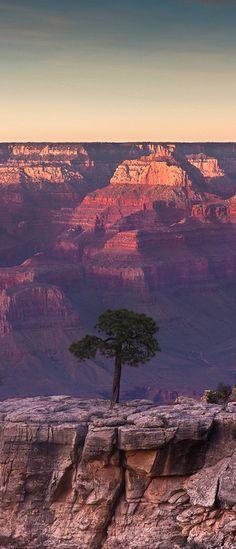 Grand Canyon Tree Mais