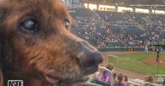 This Senior Pup Is Completing His BUCKET LIST! For His Birthday He Only Wants One Thing!
