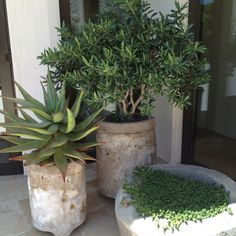 Outdoor Plantings