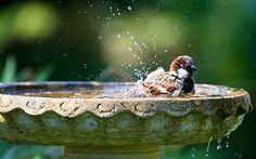 Ook de vogels willen in de zomer graag een badje nemen, dus vergeet de waterschaal niet te vullen.
