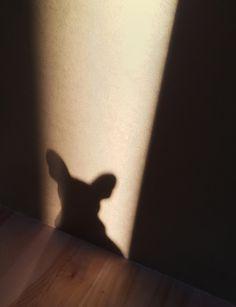 Bat shadow.