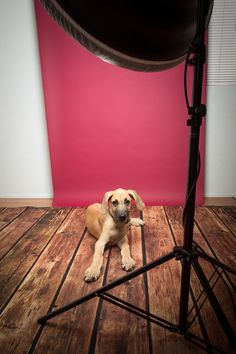 Tutorial for photographing pets in a studio.