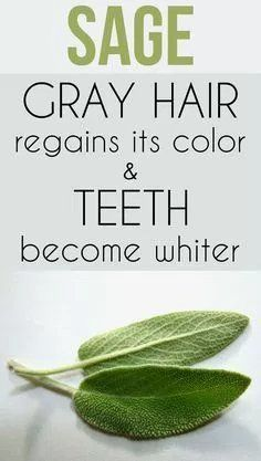 Sage - gray hair regains its color and teeth become whiter