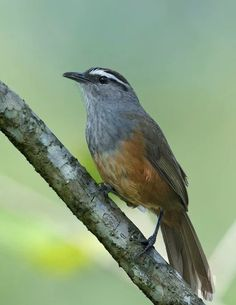 Hiro 20 Ideas Birds Pet Birds Bird