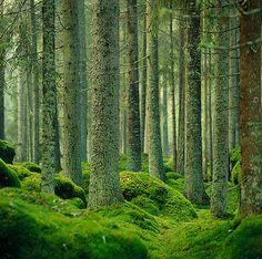 Metsä (photo by Peter Gerdehag)