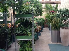 Our tropical plant hall