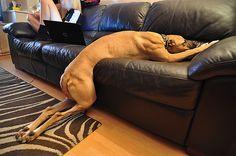 犬もつらいよ…お疲れモードでぐったりする犬まとめ