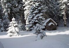 heavy snow on tree limbs...so beautiful