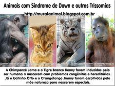 Mural Animal: Animais com Síndrome de Down e outras Trissomias