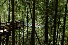 Lynn Canyon Park & Suspension Bridge Virtual Tour