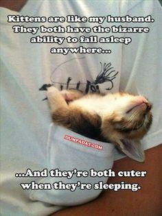 Kittens....