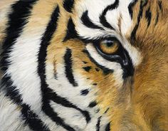 Eye Of The Tiger Poster By Lucie Bilodeau