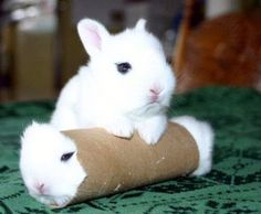 Cute Pinterest: Cute and funny animals