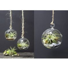 Mini Pair & Large Air Plant Set on Fab: a bit on the pricey side, but I'd love to hang them everywhere!!