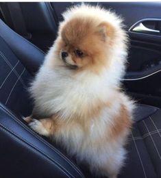 What ya looking at.