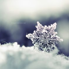 The Winter Dream  by *nnIKOO ----- could be a wall calendar or xmas card