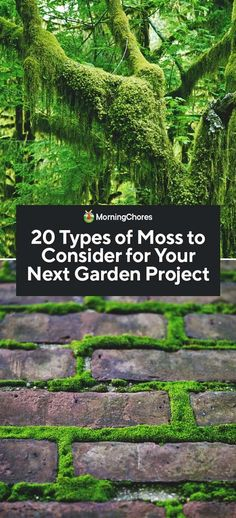 There are thousands of mosses out there, so it can be overwhelming to pick the right one for your project. We've rounded up the best types of moss. garden types 20 Types of Moss to Consider for Your Next Garden Project Next Garden, Diy Garden, Shade Garden, Dream Garden, Garden Projects, Garden Plants, Garden Landscaping, Air Plants, Garden Beds
