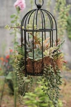 Hanging plants, creative ideas for hanging plants indoors and outdoors - indoor outdoor hanging planter ideas ideas plants Beautiful Hanging Plants Ideas Succulent Gardening, Planting Succulents, Container Gardening, Succulent Hanging Planter, Vertical Succulent Gardens, Succulent Plants, Organic Gardening, Indoor Garden, Garden Art