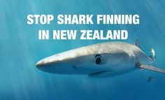 Help put an end to #sharkfinning in New Zealand waters