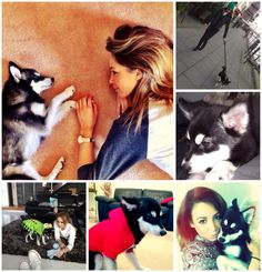 """wendy @tomlinthrusts  """"@Danielle Lampert Peazer: Happy 1st Birthday to the most perfect doggy, Loki ❤️"""