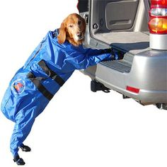 I could never actually do this, just think stuffing your dog a glorified duffle bag is hilarious.
