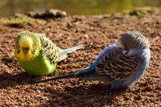 Fotoabenteuer im Vogelpark Marlow - Pixelino.net