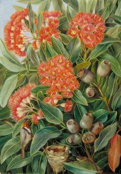 Flowers and Seed-Vessels of a West Australian Gum Tree and Honeysuckers by Marianne North   Date painted: early 1880s Oil on board, 50.8 x 35 cm Collection: Royal Botanic Gardens, Kew