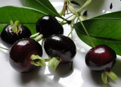 Grumichama round purple-black fruits like cherries with soft melting sweet flesh from Brazil