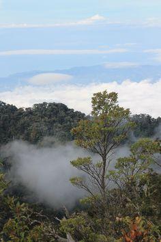 Es un bosque Está en Cerro Chirripó, Costa Rica. Se puede pasar, tener en aventura, y ver mucho cosas.