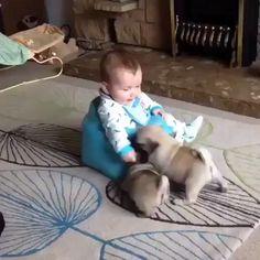 Animal Humour, Funny Animal Memes, Cute Funny Animals, Cute Baby Animals, Funny Dogs, Cute Funny Baby Videos, Cute Funny Babies, Cute Pugs, Cute Animal Videos