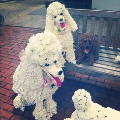 Spotted these poodles made of flowers on a bench in Southampton, NY.  (Taken with Instagram)