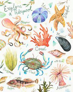 Entdecken Sie eine Tidepool | Ozean-Chart | Aquarell Wandkunst | Marine | Katie Daisy | 8 x 10 | 11 x 14
