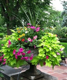 Container Flower Garden Most Beautiful Gardening Flowers Ideas For You container gardening flowers backyard landscaping patio planter ideas flower beds in front of h. Patio Planters, Flower Planters, Flower Pots, Porch Planter, Planters For Front Porch, Potted Plants Patio, Fall Planters, Front Porches, Flower Ideas
