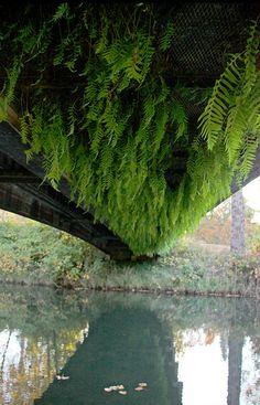 Vegetated Under-Bridge | Pedestrian Bridge | Eugene, OR by Autzen stadium