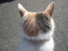 猫のウシロアタマ 一日中見ていても飽きません