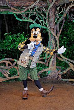 Goofy at Animal Kingdom, Walt Disney World