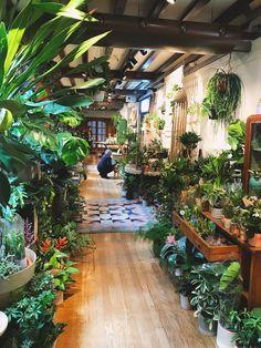 30 Fresh and Calming Tropical Garden Ideas, – Diy Garden Room With Plants, House Plants Decor, Plant Decor, Small Tropical Gardens, Tropical Patio, Interior Garden, Interior Design, Rooftop Garden, Back Gardens