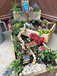 Indoor Fairy Gardens, Fairy Garden Plants, Mini Fairy Garden, Fairy Garden Houses, Miniature Fairy Gardens, Small Gardens, Indoor Garden, Diy Fairy House, Miniature Fairies