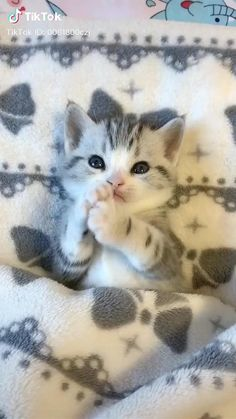 Baby Animals Super Cute, Cute Baby Cats, Funny Cute Cats, Cute Cat Gif, Cute Little Animals, Cute Cats And Kittens, Cute Funny Animals, Kittens Cutest, Cute Cat Video