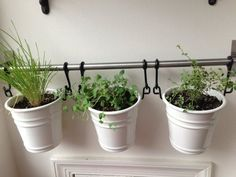"IKEA fintorp mounted on the wall with herbs in pots--on the kitchen's ""dead"" brick wall?"